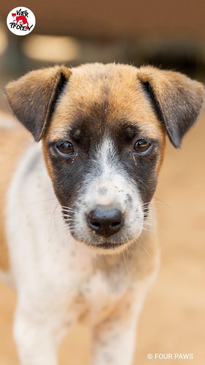 Rettung von Hund Lucky, 2018