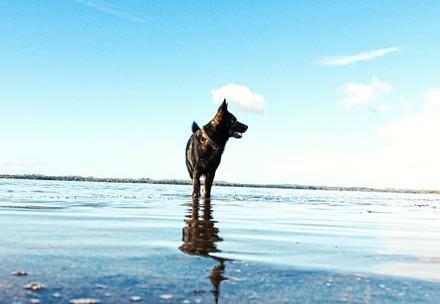 Hund auf Reisen am Meer