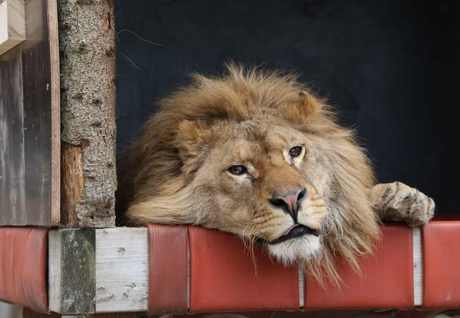 Lion Ivan-Asen in his hammock