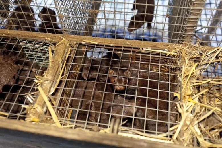 minks-cage