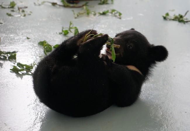 Les oursons Mi et Tam grandissent en sécurité