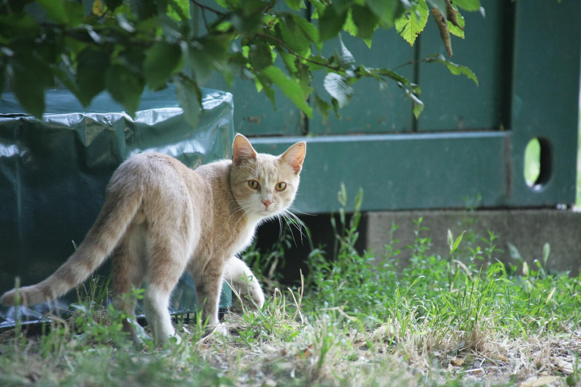 Stray animal care