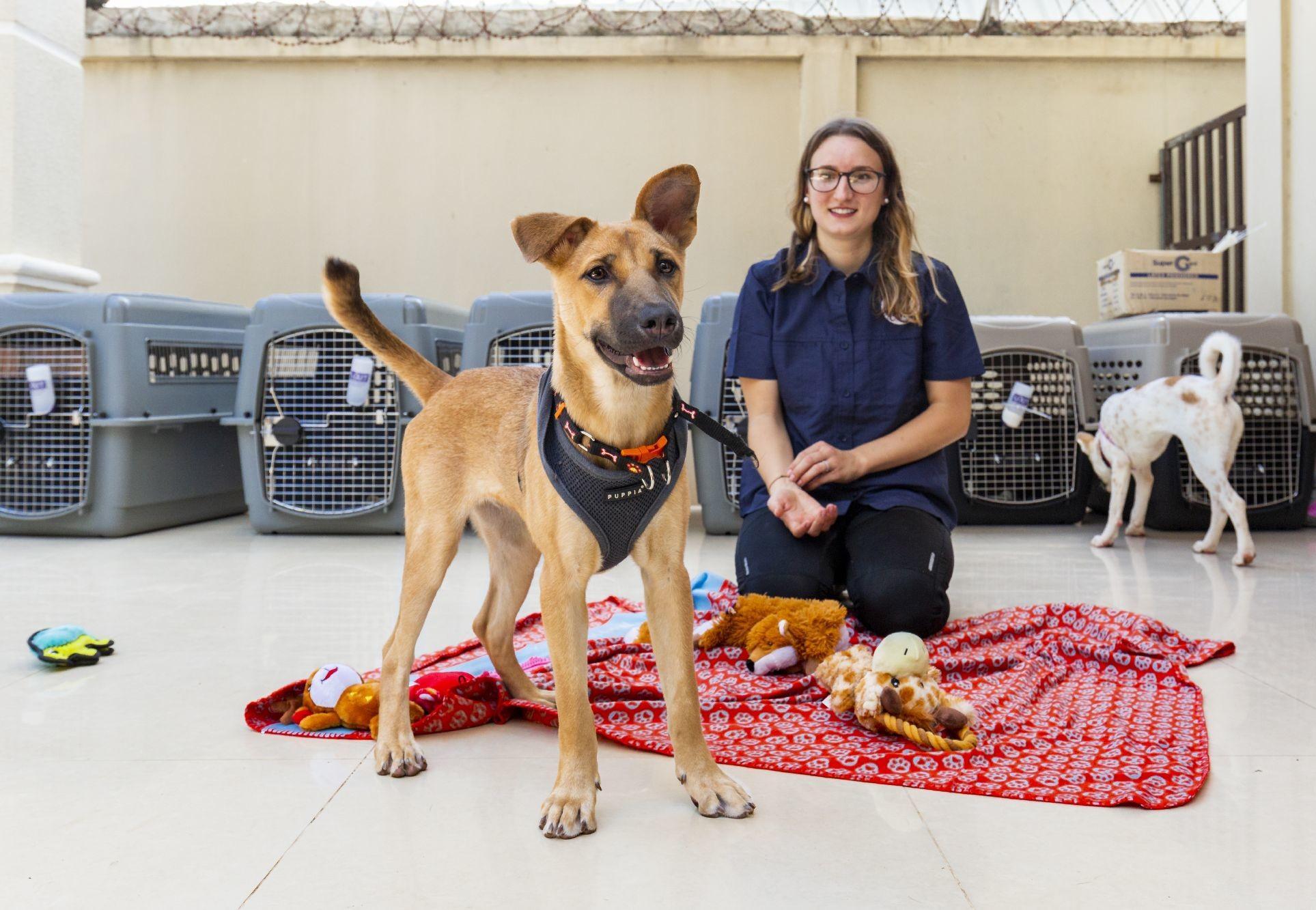 Die Hunde werden für den Transport in die USA vorbereitet