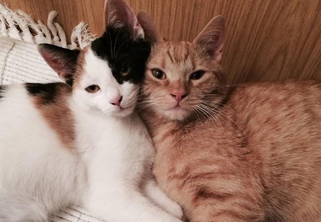 Katzen kuscheln miteinander