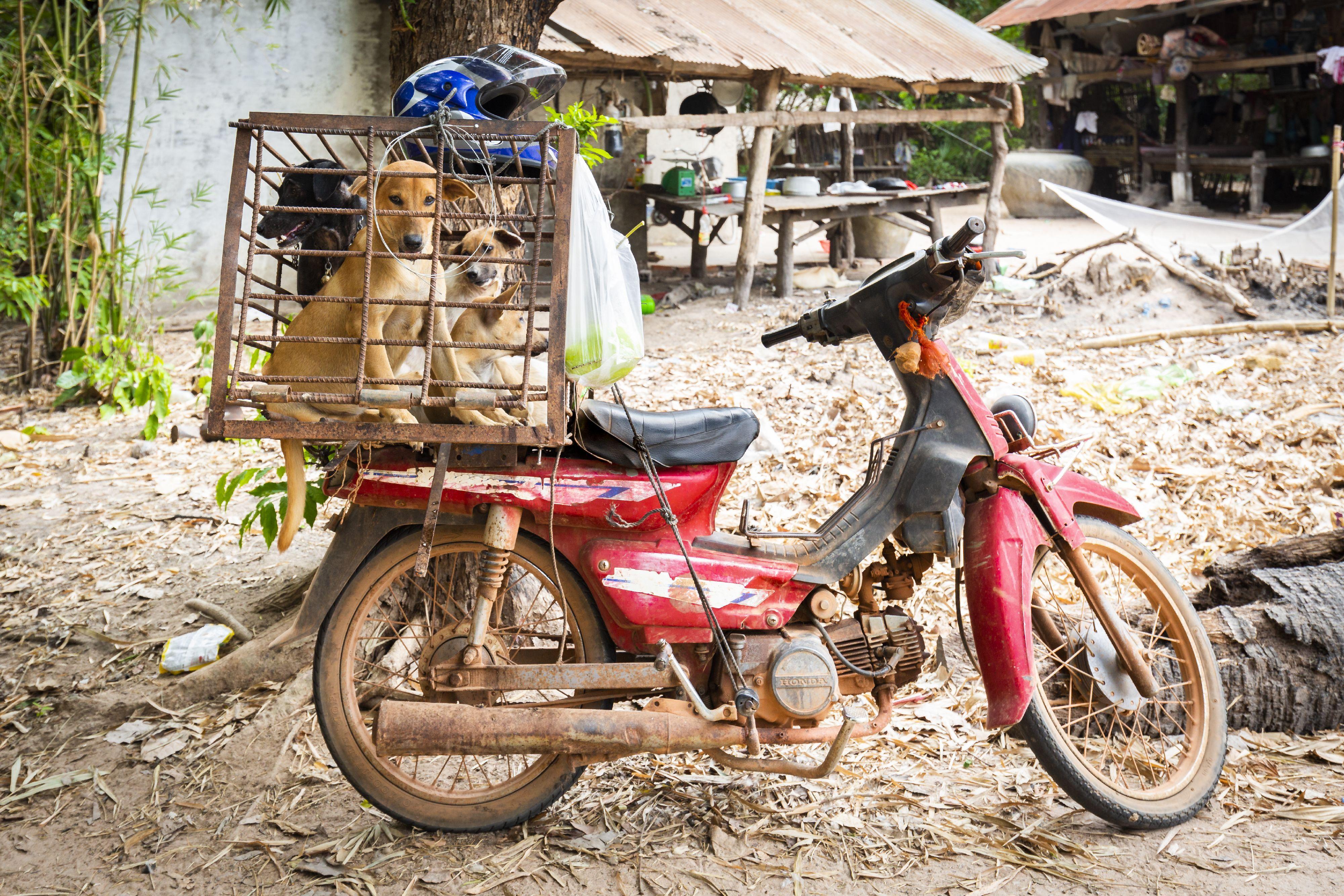 Honden worden vervoerd naar een slachthuis