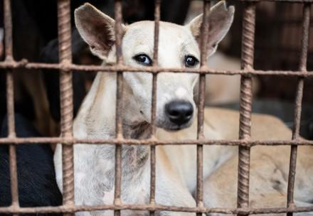 Hond in kooi voor slacht