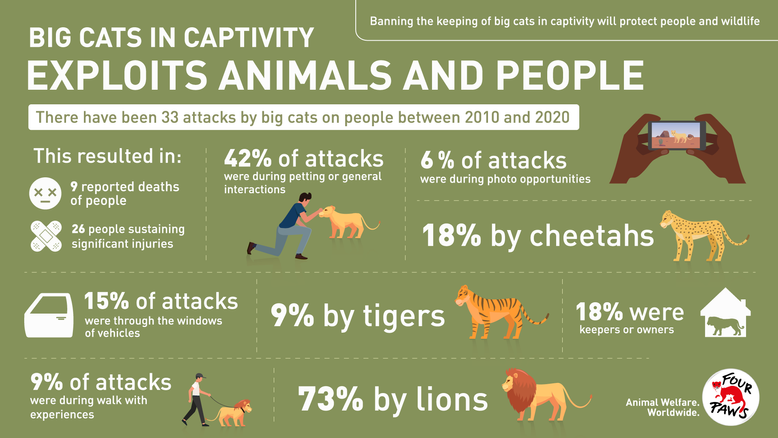 Big cats in captivity exploits animals and people