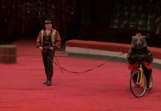 Jambolina im Zirkus