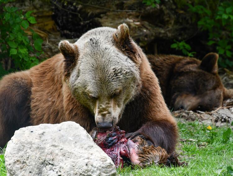 Bärenfutter