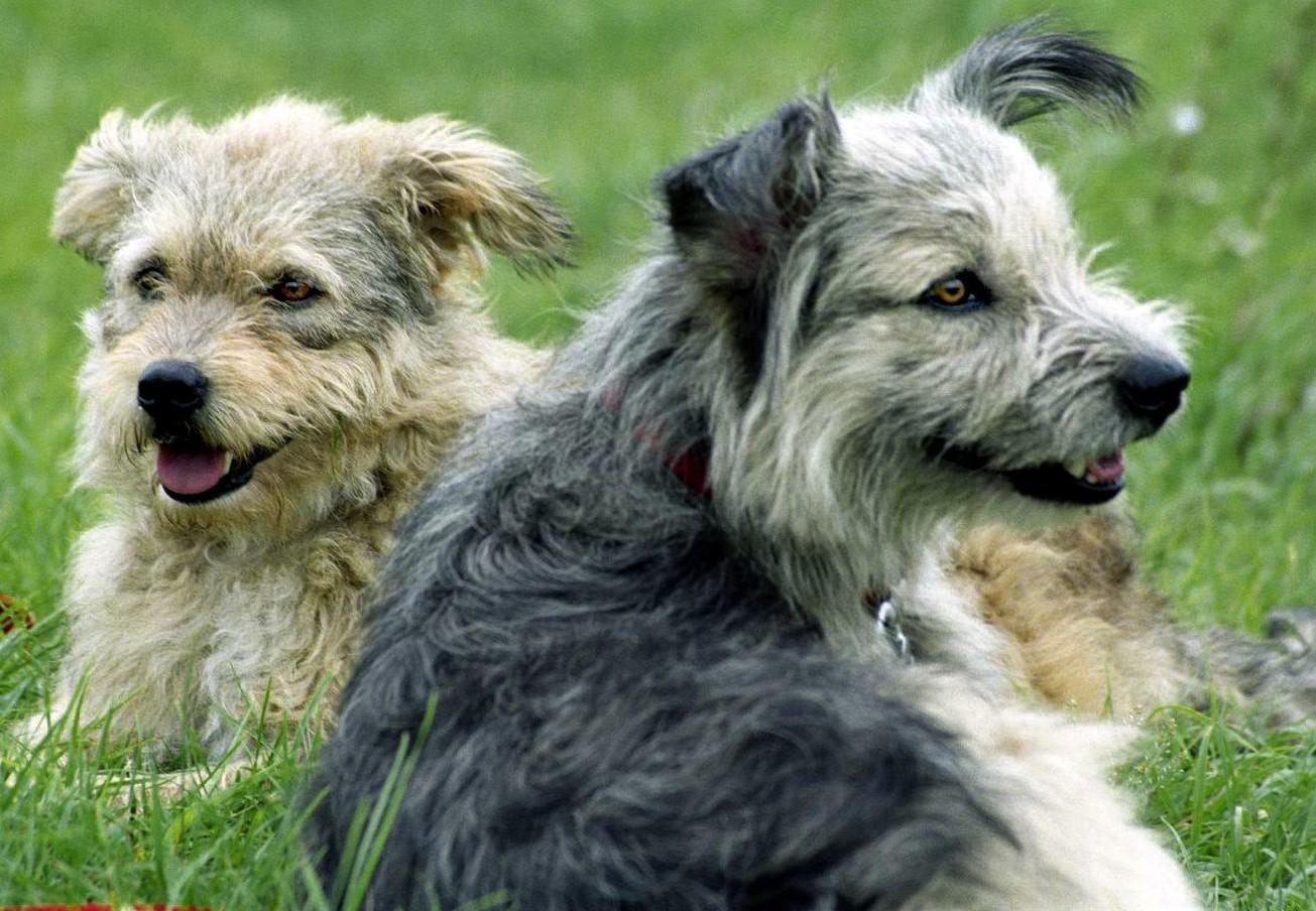 Honden in een park