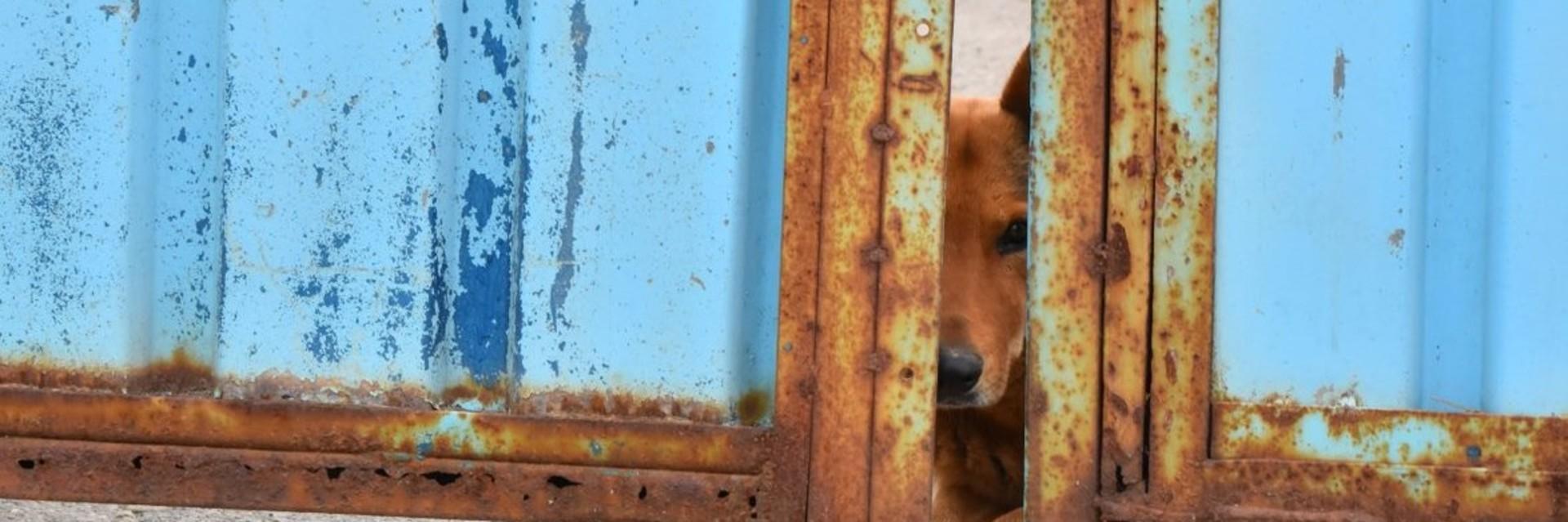 Streunerhund auf Rumäniens Strassen