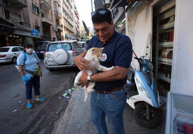 Dr. Amir Khalil, VIER PFOTEN Tierarzt und Leiter der Beirut Mission.