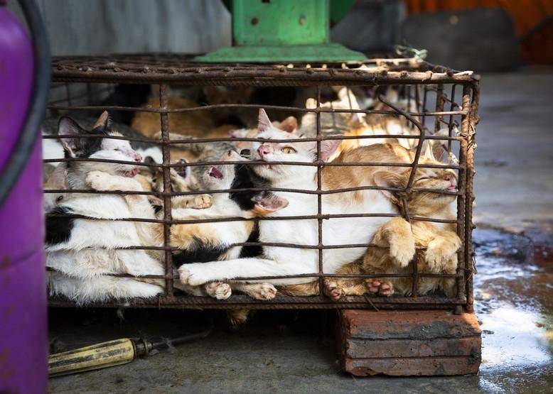 Katzen in Käfig in Vietnam