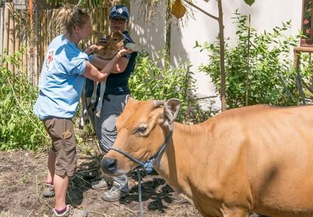 Aide aux animaux sinistrés de l'île de LOMBOK