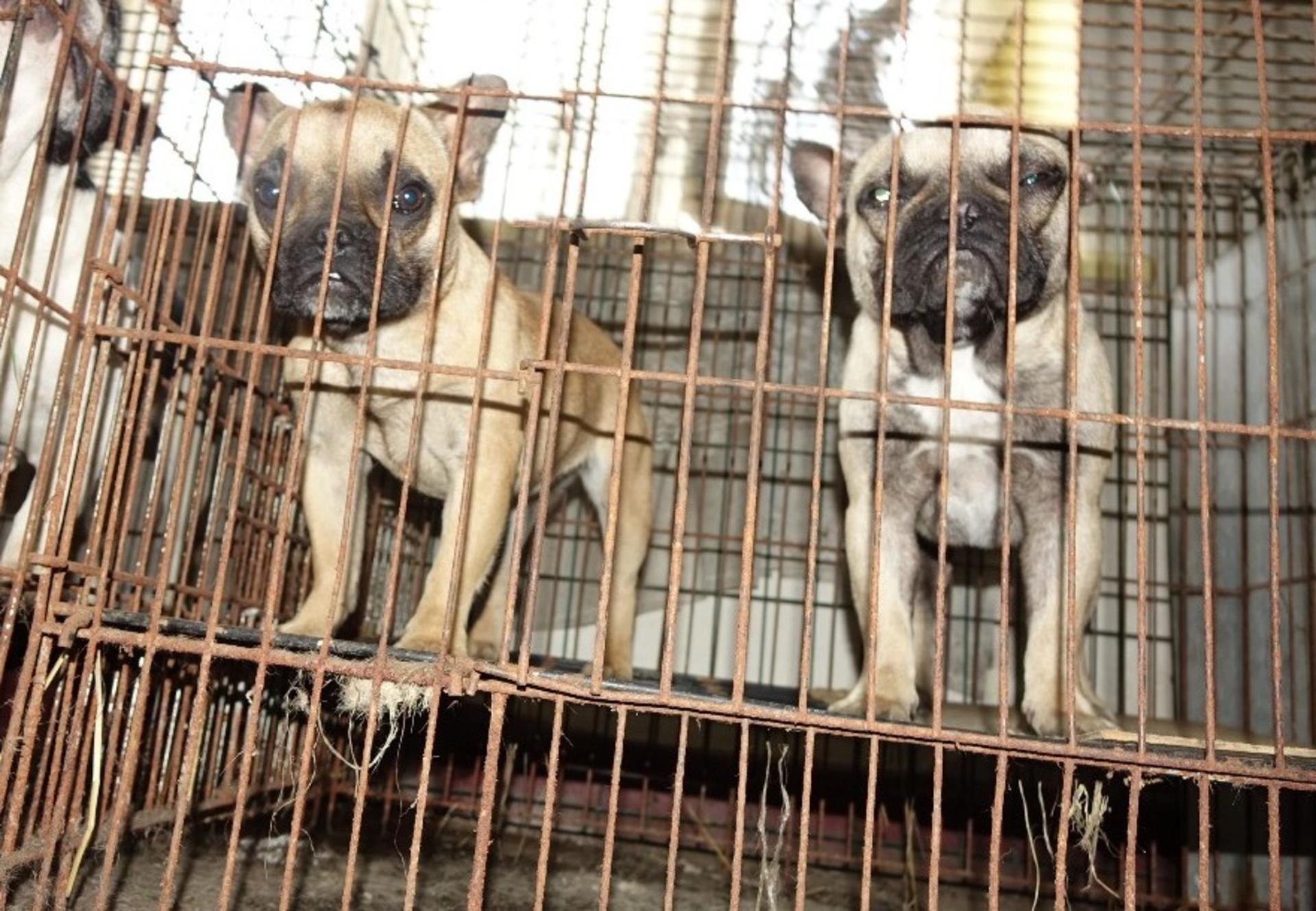 Puppy Mills and the Puppy Trade - Companion Animals - Topics