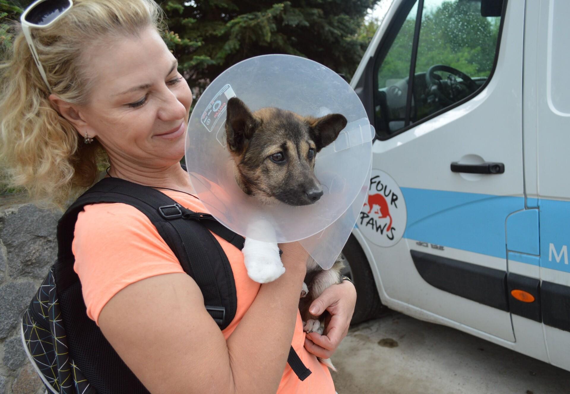 VIER PFOTEN Staff mit Streunerhund