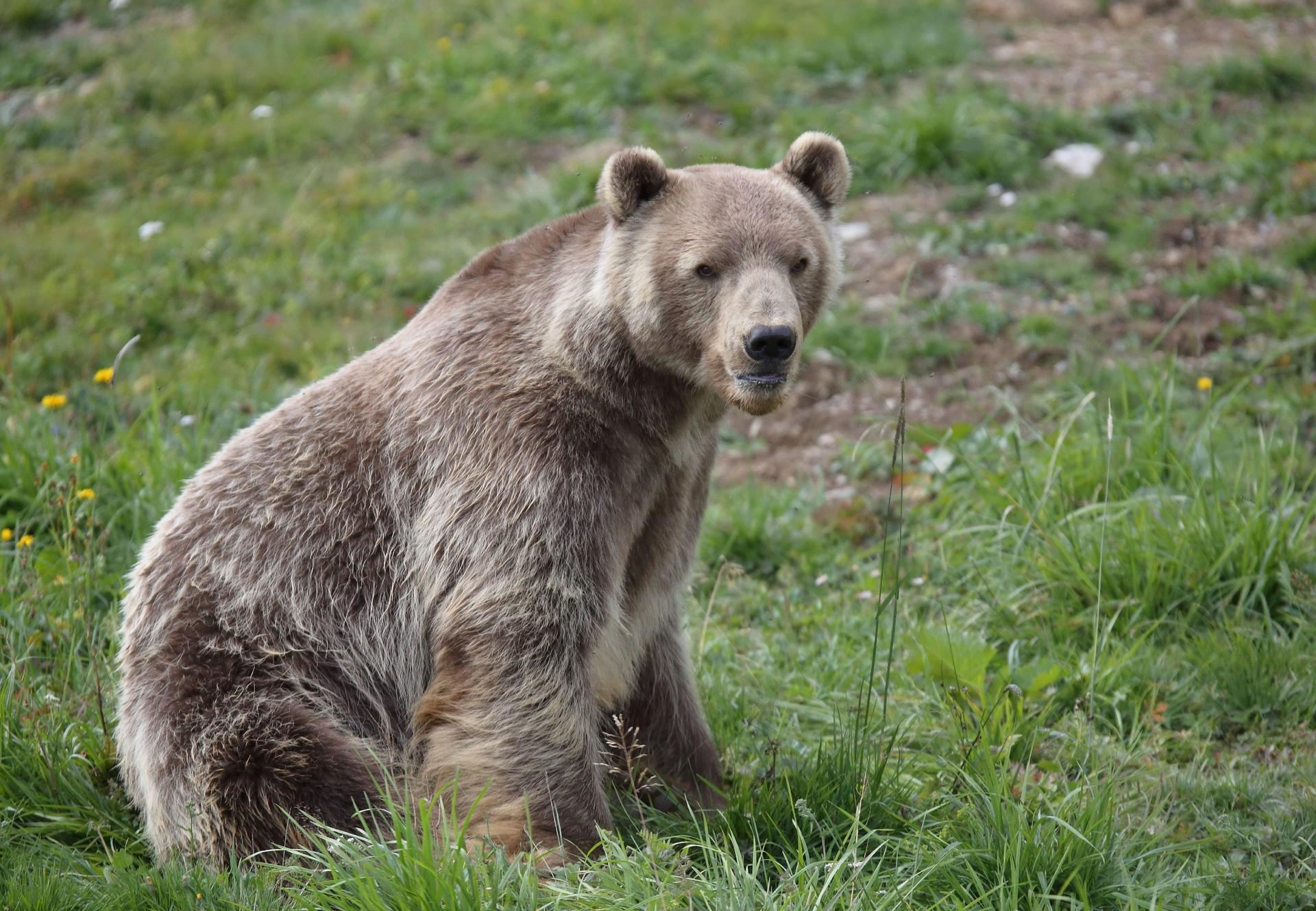 Calendrier Arosa Terre des Ours