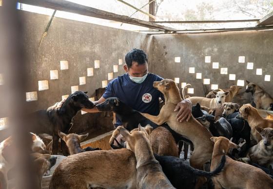 Un minibus transportant 61 chiens vers un abattoir est confisqué au Cambodge