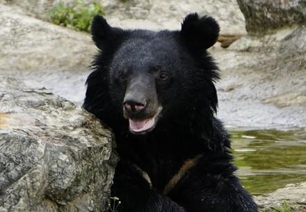 Bear Mui at BEAR SANCTUARY Ninh Binh sitting by a pond peacefully