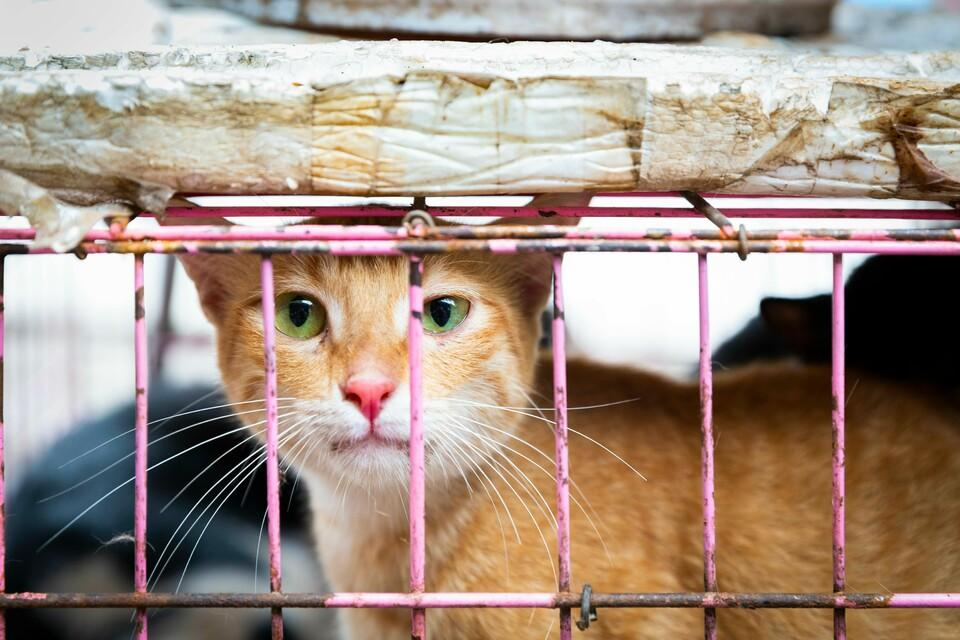Ginger cat in a cage looking at the camera
