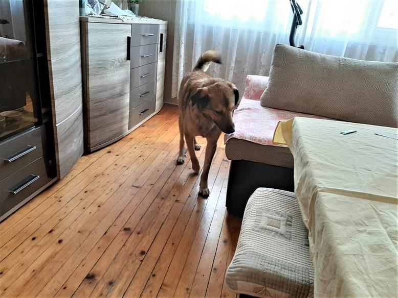 dog-gorubcho