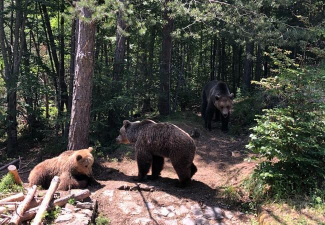 Bears Riku, Jeta and Nastasja, 2019