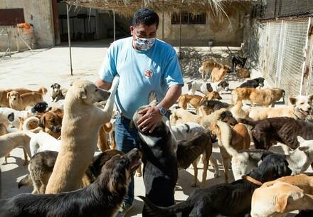 Bedürftite Hunde werden versorgt