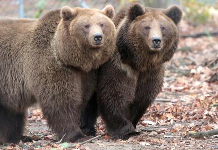 Dasha and Lelya at BEAR SANCTUARY Domazhyr