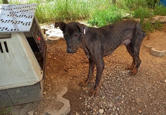 Hund Kovi nach der Rettung