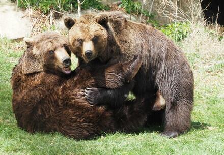 Bears Emma and Erich in a friendly brawl
