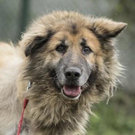 куче Тото (Dog Toto)