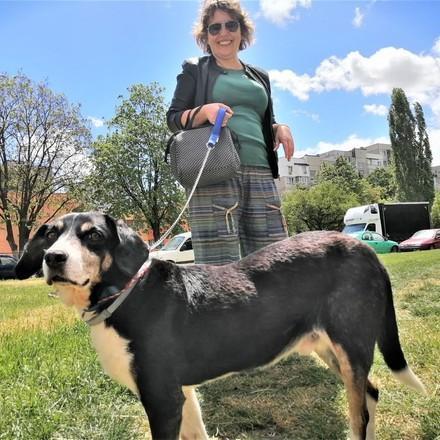 dog-vito-grass-red-leash