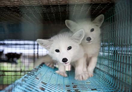 two-puppies-blue-cage