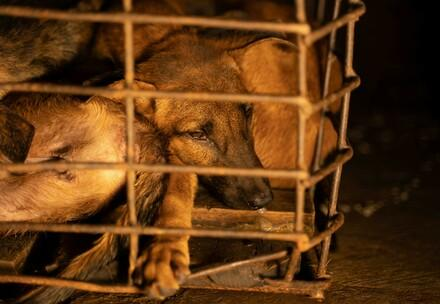 Dogs rescued from cages
