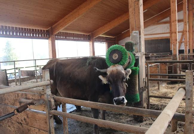 Beschäftigung für die Kühe