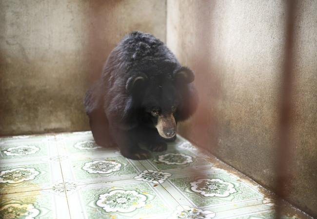 Keo when he was rescued from a Bile Farm in Vietnam