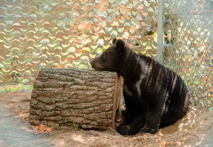 Brown bear family rescued after years as hotel entertainment in Ukraine