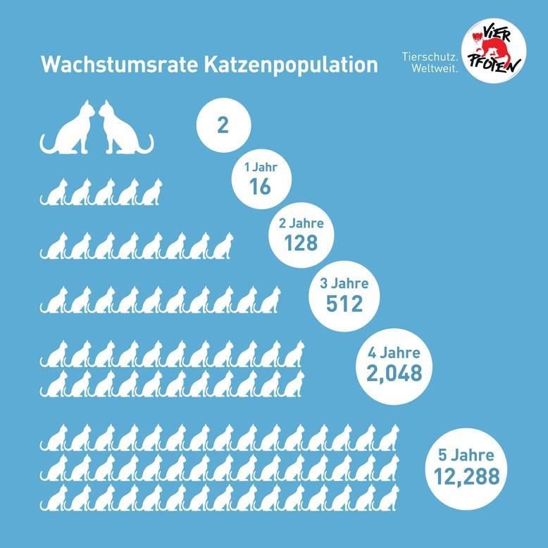 Infografik, wie sich die Streunerkatzenpopulation entwickelt. Aus zwei Katzen werden innerhalb von 5 Jahren 12680 Katzen