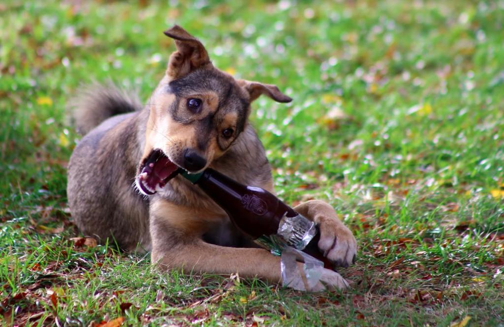 куче си играе с бутилка