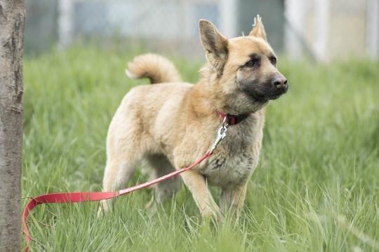 dog-djino-grass-red-leash
