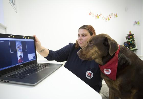 Hund Lisa in Rumänien