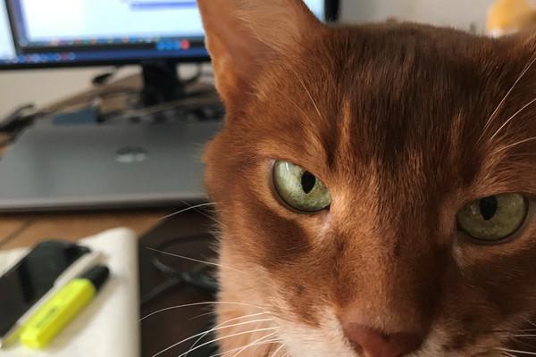 Katze schaut genervt in die Kamera