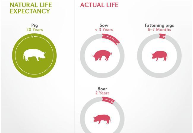 The Life-Span of Farm Animals