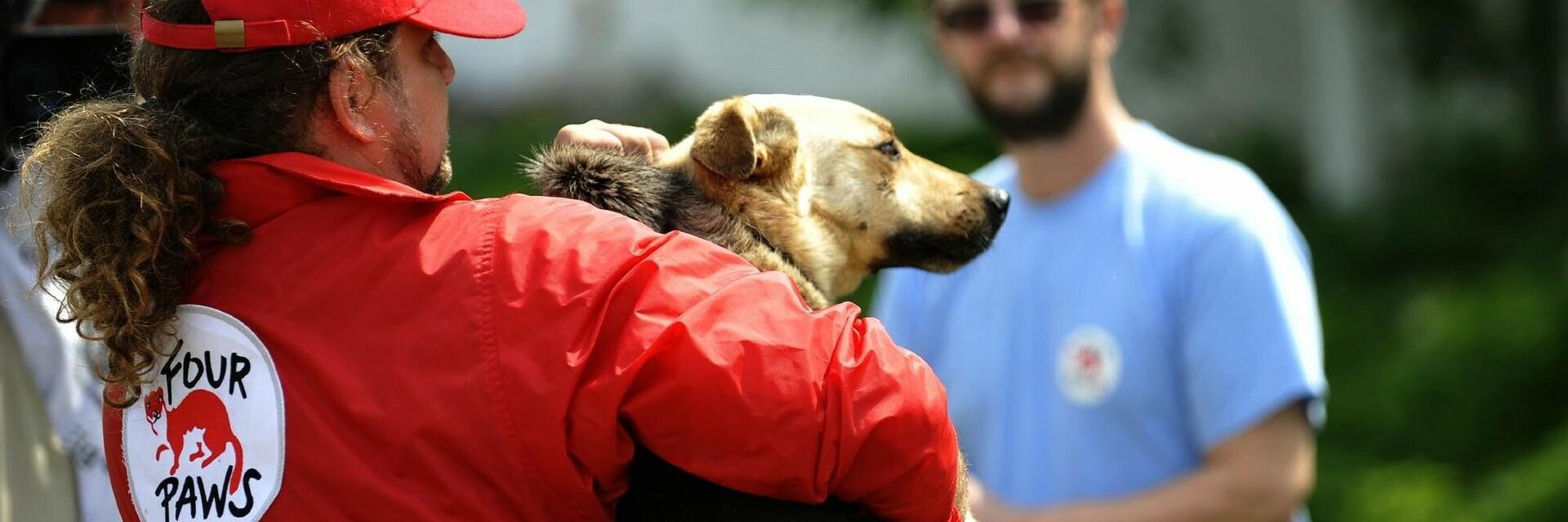 Mitarbeiter trägt geretteten Hund