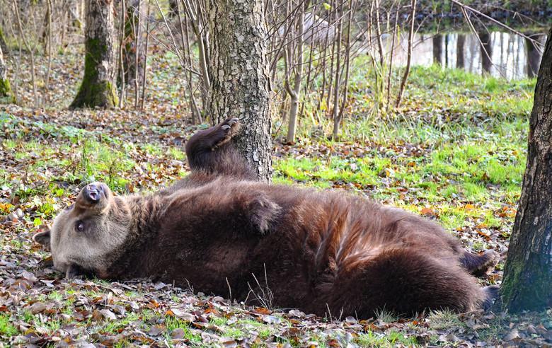 Michal spielt im Wald