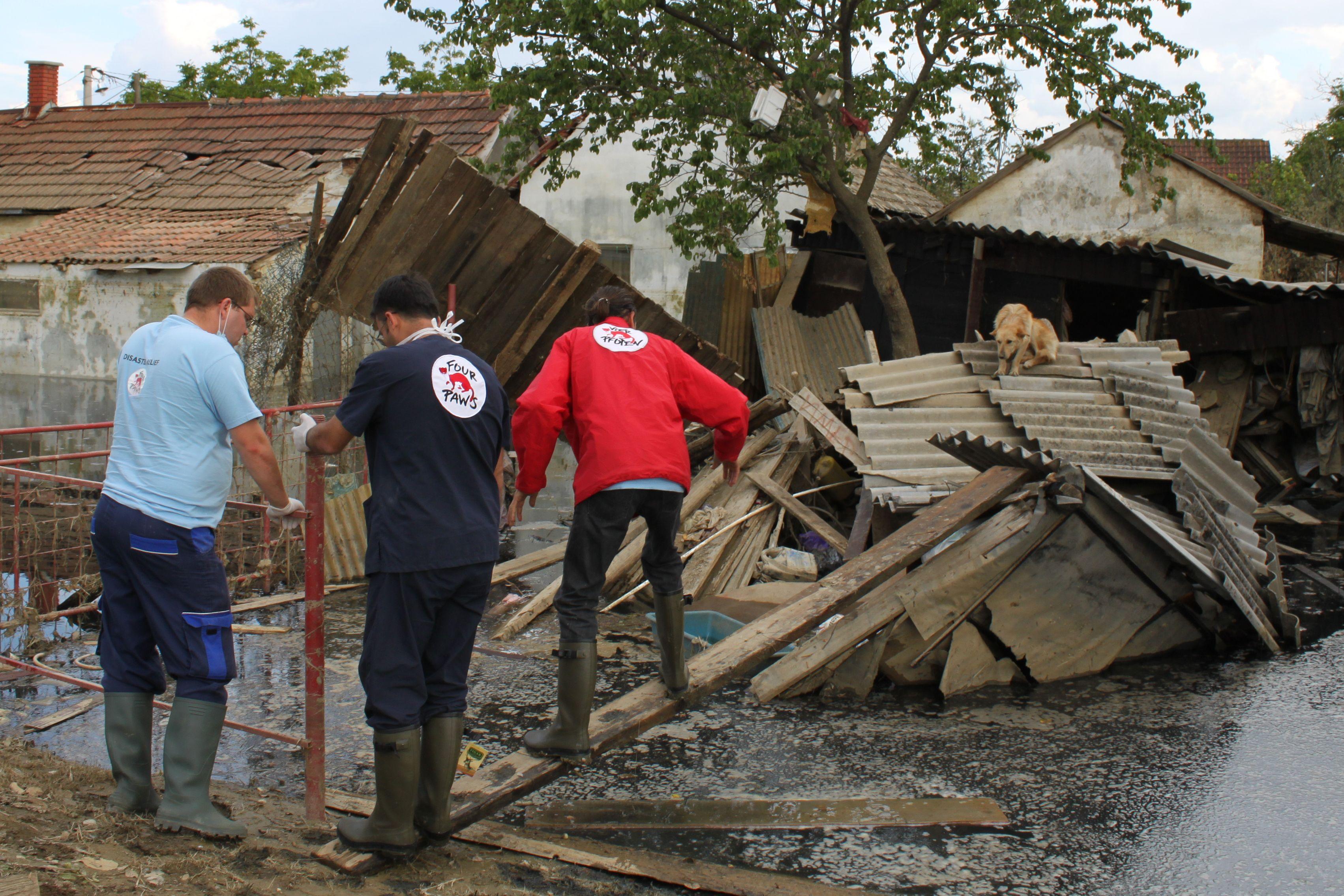 Hilfe für Tiere in Katastrophengebieten