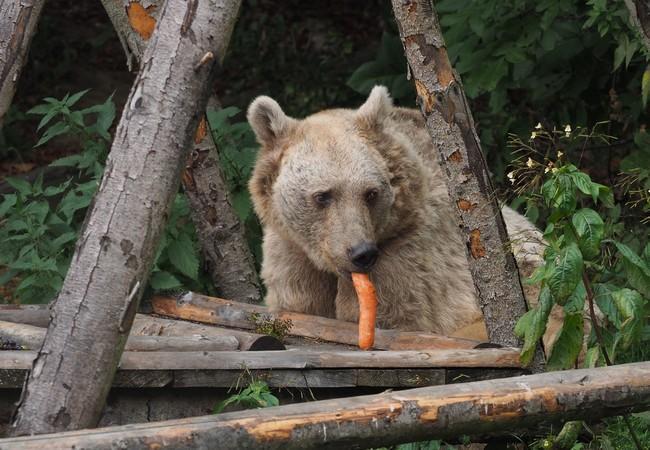 Jerry mag Karotten.