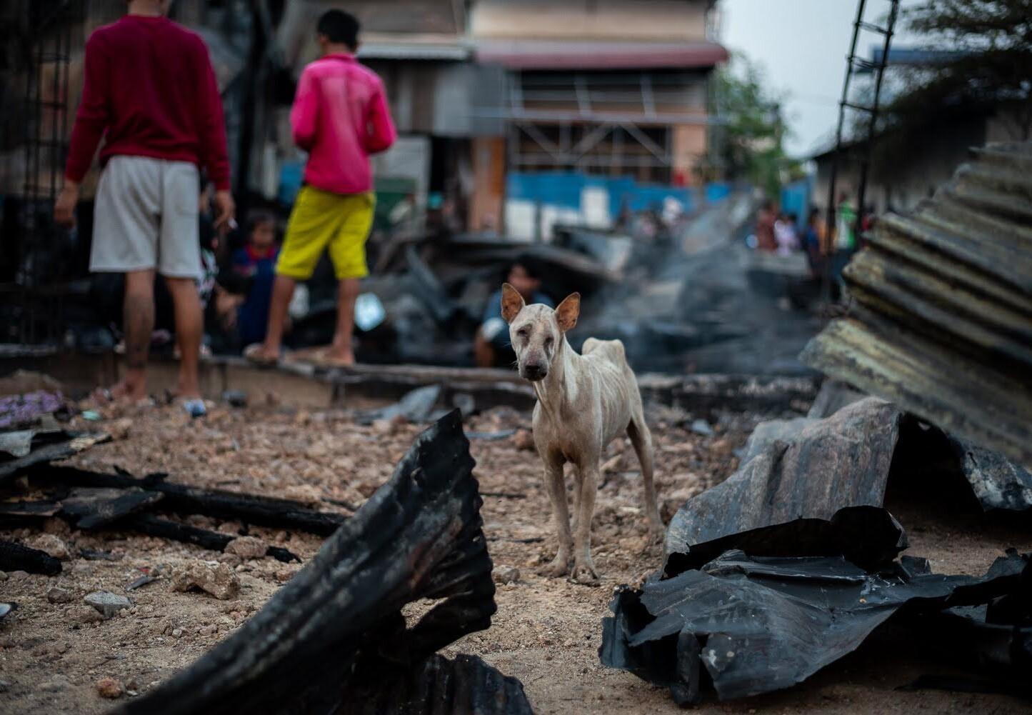 Verwaarloosde en verminkte zwerfhond tussen het puin in Cambodja
