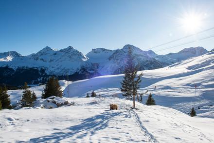 Das Arosa Bärenland im Winter