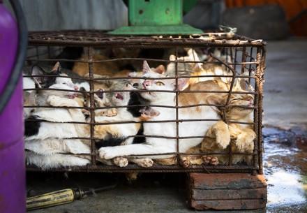 Katzen im Käfig in Asien